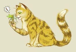 kitty--halion-cat