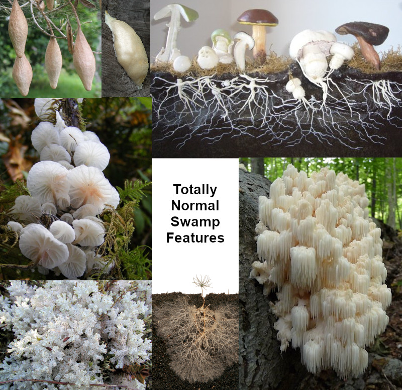A composite image of various white fungus and cocoons, labeled as Totally Normal Swamp Features.